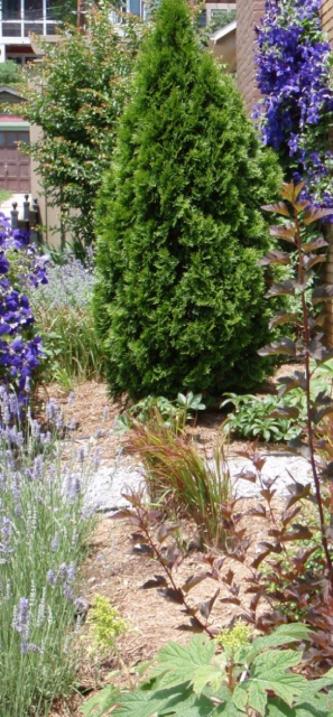 March 13 - Garden